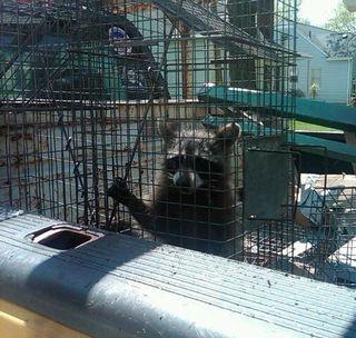 4 30 2010 Critter Caught